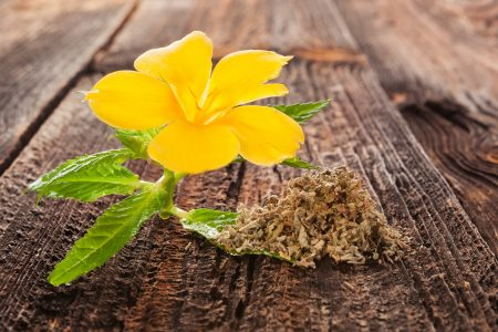 Everything You Need to Know About Smoking Damiana
